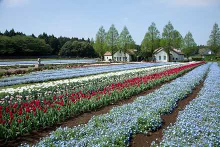 お花畑に圧倒される!東京近郊絶景6選