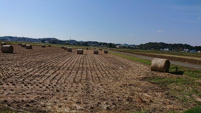 畜産用,かき集める,稲刈り後,煙公害